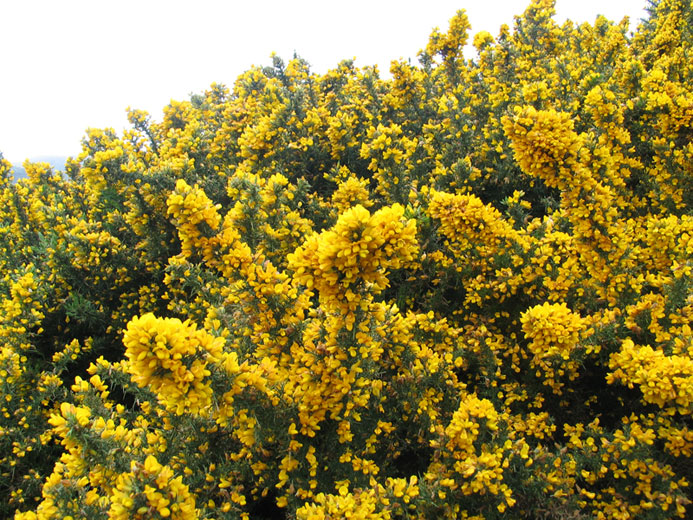 Of Gorse Of Course on Small 2 Story House
